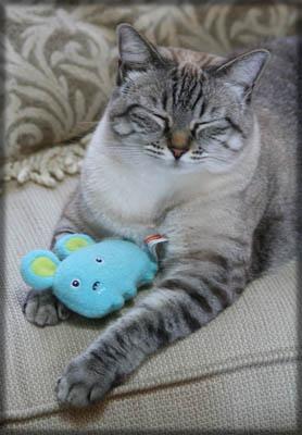 Colehaus Cats - Maxx 2010. © Colehaus Cats