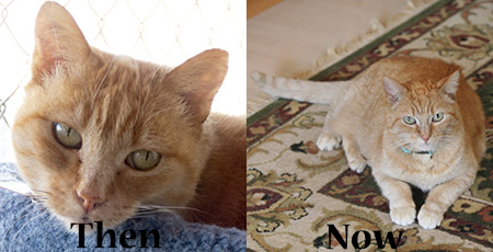 Sunny, formerly foster Miss Itty, then and now