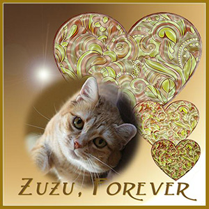 Zuzu, 2009-2017. Never forgotten.