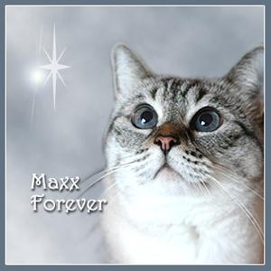Maxx Forever 2004-2015