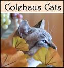 Colehaus Cat Maxx