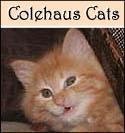 Colehaus Cat Pia Bean