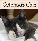 Colehaus Cat Tessa