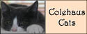 Colehaus Cats med Badge