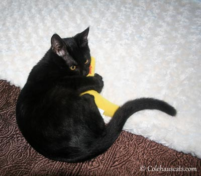 Sweet Olivia and her nip banana.
