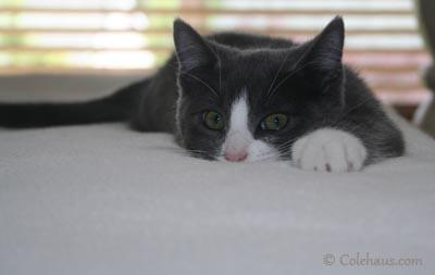 """Tessa """"Danger Cat"""" resting."""