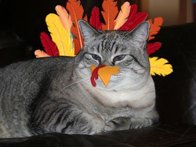The Rare Maxx Turkey.