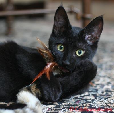 Olivia's Snake Toy.