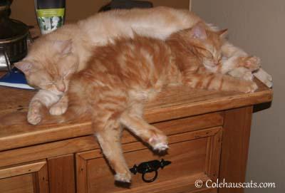 Miss Newton & Pia Bean - 2012. © Colehaus Cats