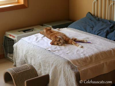 "Seth says, ""This bed is all mine.""  © Colehaus Cats."
