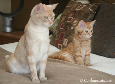Attentive Girls - 2012. © Colehaus Cats.