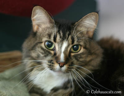 Bobbi Up for Adoption at West Columbia Gorge Humane Society.