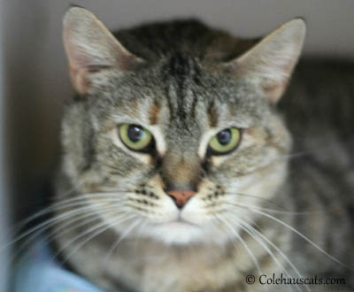 Gypsy Up for Adoption at West Columbia Gorge Humane Society.