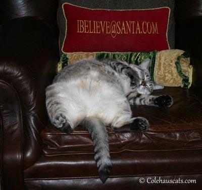 Maxx Believes - 2012. © Colehaus Cats