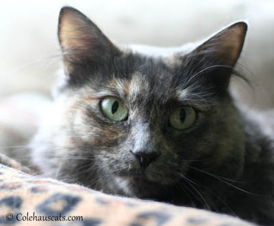 Priscilla Up for Adoption at West Columbia Gorge Humane Society.