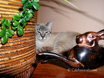 Maxx and the Bronze Bunny - 2004. 2013 © Colehaus Cats