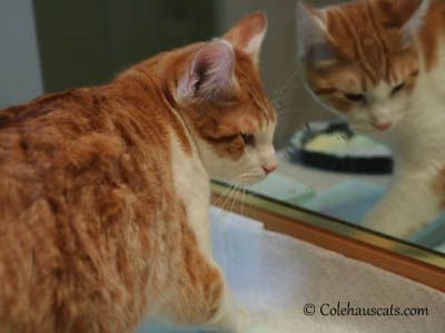 Quint, the painter, at work - 2013 © Colehaus Cats