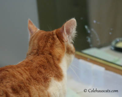 The Ears of Annoyance - 2013 © Colehaus Cats