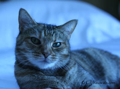 Ruby Tuesday - 2013 © Colehaus Cats