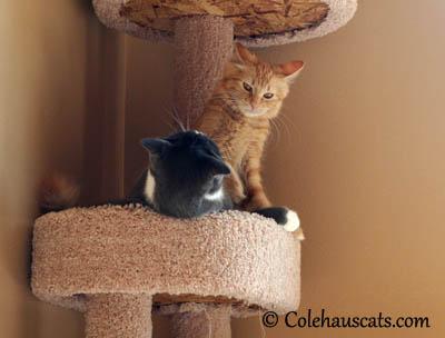 Kissing Wars - Tessa vs Pia - 2013 © Colehaus Cats