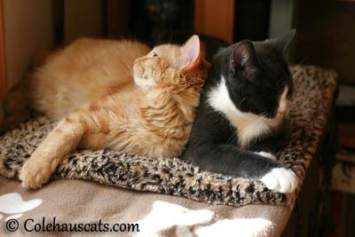 Pia and Tessa - 2013 © Colehaus Cats