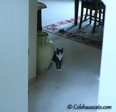Oh, hi Mom! - 2013 © Colehaus Cats