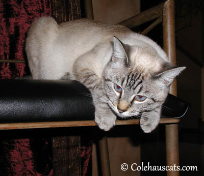 Young Maxx' first March - 2004-2013 © Colehaus Cats