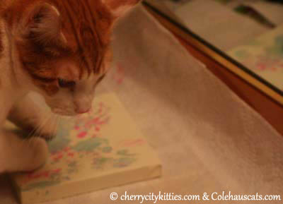 Bonus use of a left paw. His first two-paw piece! - 2013 © Colehaus Cats