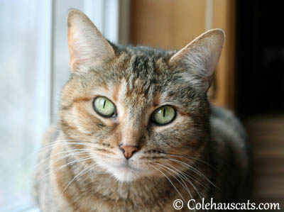 Pretty Ruby - 2013 © Colehaus Cats