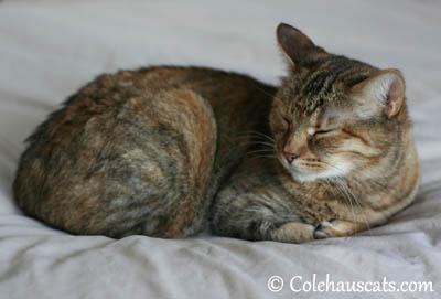 Shhh, I'm napping - 2013 © Colehaus Cats