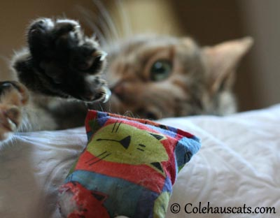 Ruby's Favorite Catnip Pillow - 2013 © Colehaus Cats