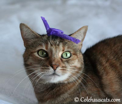 This is NOT my spring hat - 2013 © Colehaus Cats