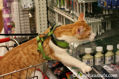 Shopping at Craft Warehouse for art supplies - 2013 © Colehaus Cats