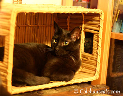 This is my Basket. 2013 © Colehaus Cats