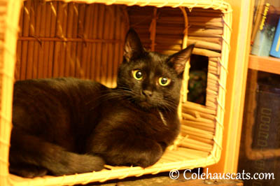 Not Everyone has a Basket? 2013 © Colehaus Cats