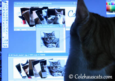 Now resize that and... 2013 © Colehaus Cats