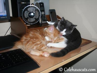 Little sisters Pia & Tessa - Summer 2012 © Colehaus Cats