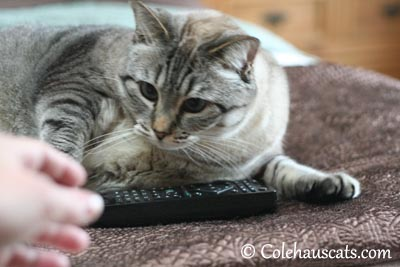 My remote! Get away! - 2013 © Colehaus Cats