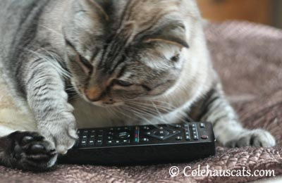 Which one of these buttons... - 2013 © Colehaus Cats
