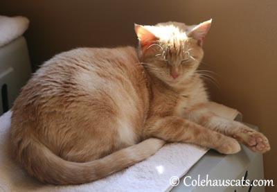 Just a touch of sun - 2013 © Colehaus Cats