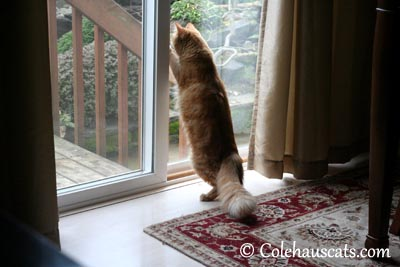 Betting on bugs out there! - 2013 © Colehaus Cats