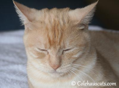 Quiet One - 2013 © Colehaus Cats