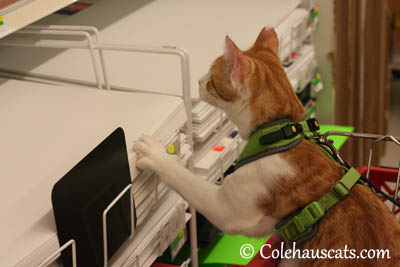 Browsing poster paper - 2013 © Colehaus Cats