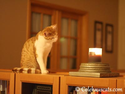 Quint's woodsmoke candle - 2013 © Colehaus Cats