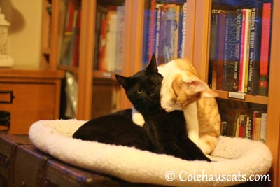 You smell good! - 2013 © Colehaus Cats