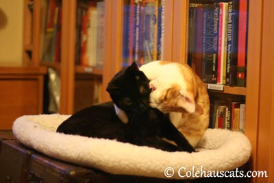 Good enough to nibble! - 2013 © Colehaus Cats