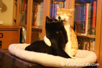 Stop that! - 2013 © Colehaus Cats