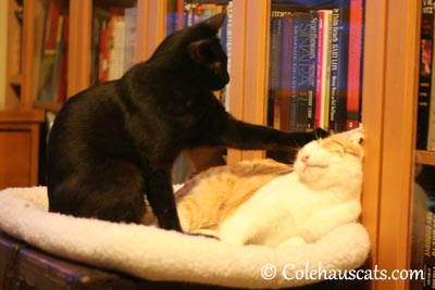 Behave, brother! - 2013 © Colehaus Cats