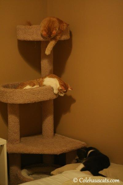Pia and Quint watch Tessa  - 2013 © Colehaus Cats