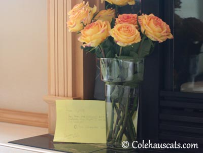 Tessa's Thank You Flowers - 2013 © Colehaus Cats